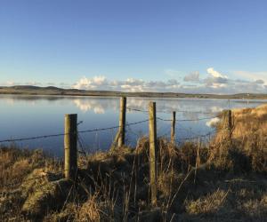 Loch of Harray fenceline