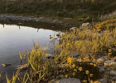 The Loch shore1